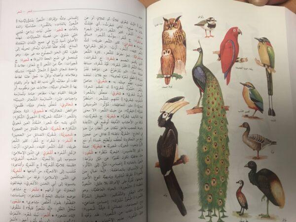 المنجد الوسيط في العربية المعاصرة - Dictionnaire AL wassit de l'arabe moderne, -9484